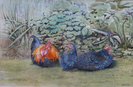 Rose Chickens, Watercolour by Brian Duck