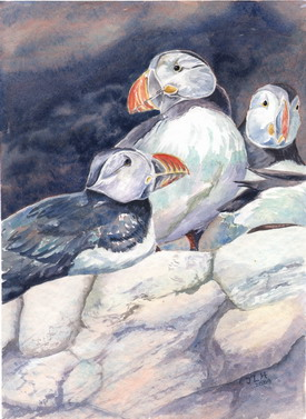 Puffins watercolour by J Horn