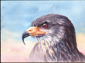 Snail Kite, Watercolour by Jennifer Horn